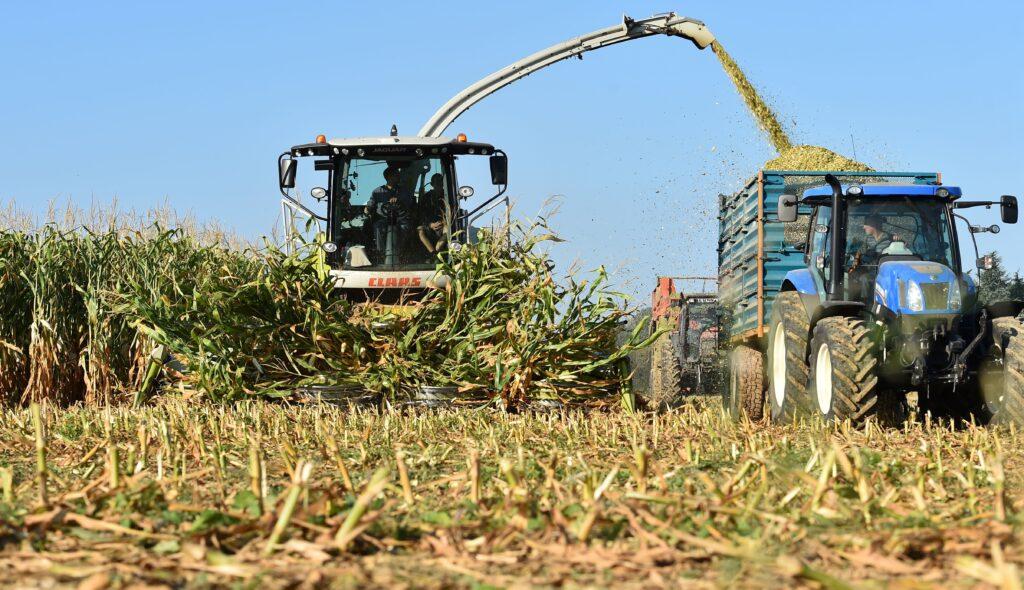 Farmers gather corn